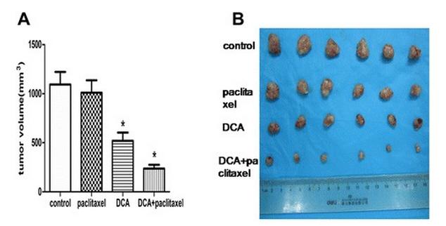 fantastische Wirkverstärkung von DCA auf das Chemotherapeutikum