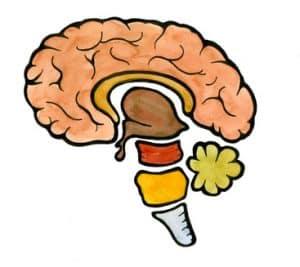 menschliches Gehirn, die fantastischste Maschine der Welt!