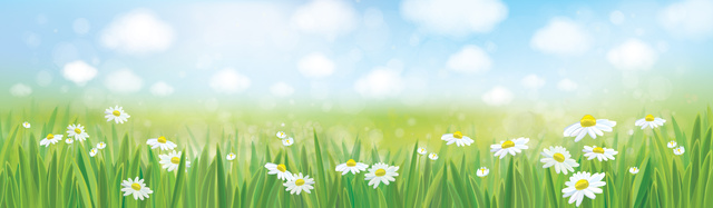 Vector summer landscape, blue sky , meadow with chamomiles.