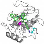 Matrix-metallo-proteinase-Modell