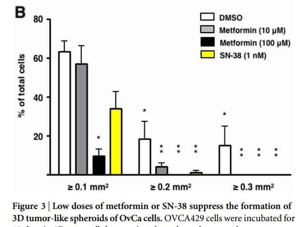 Metformin (schwarz) hemmt das Wachstum von Tumor-Sphäroiden (=Tumorknoten in der Zellkultur) besser als Chemotherapie (gelb)