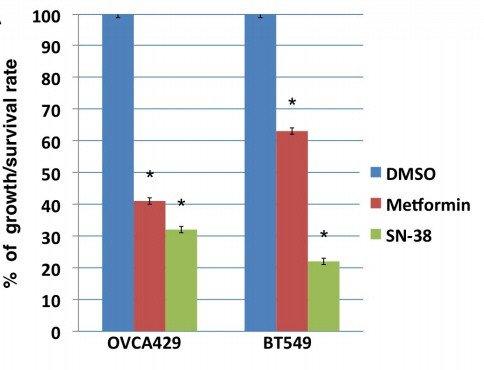 Wachstums-Hemmung durch niedrig dosiertes Metformin (rot) und Campto (grün) im Vergleich zu Kontroll-Zellen (blau).