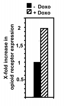Methadon und Doxorubizin Fresern (2)