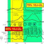 Hormonverlauf während Zyklus – OP-Zeitpunkt bestimmt Überlebensrate