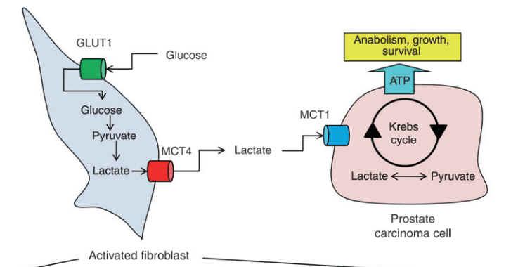 Stroma Zellen und Krebszelle
