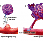 angiogenese